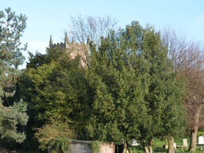 all_saints_church_exteriors_churchyard_7.JPG